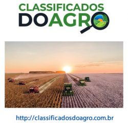 classificado agro